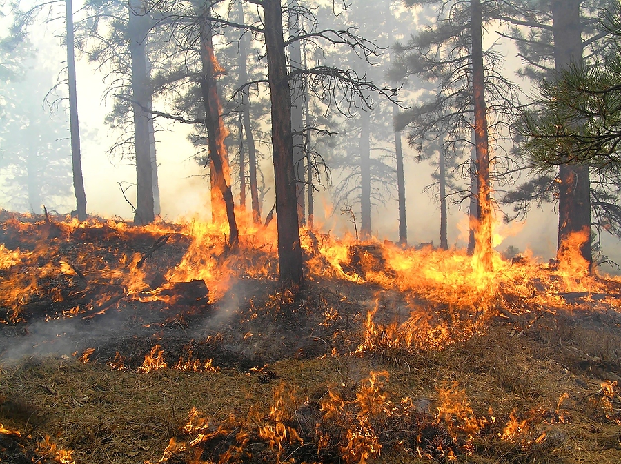 An image of a spreading forest fire.
